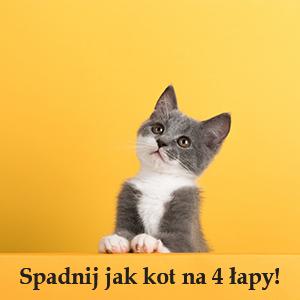 Koty zawsze spadają na 4 łapy!