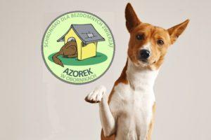Wyższa Szkoła Bezpieczeństwa wspiera schroniska dla zwierząt!